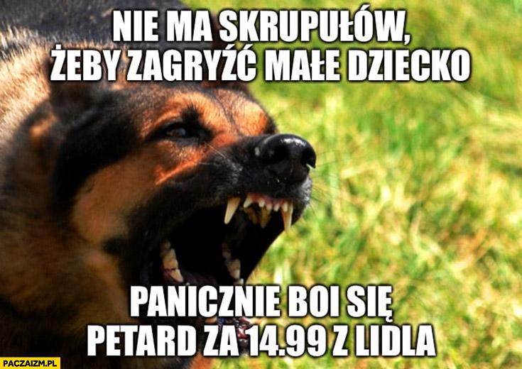 Pies nie ma skrupułów żeby zagryźć małe dziecko, panicznie boi się petard za 14,99 z Lidla