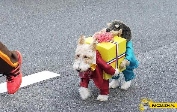 Pies niosący pudełko