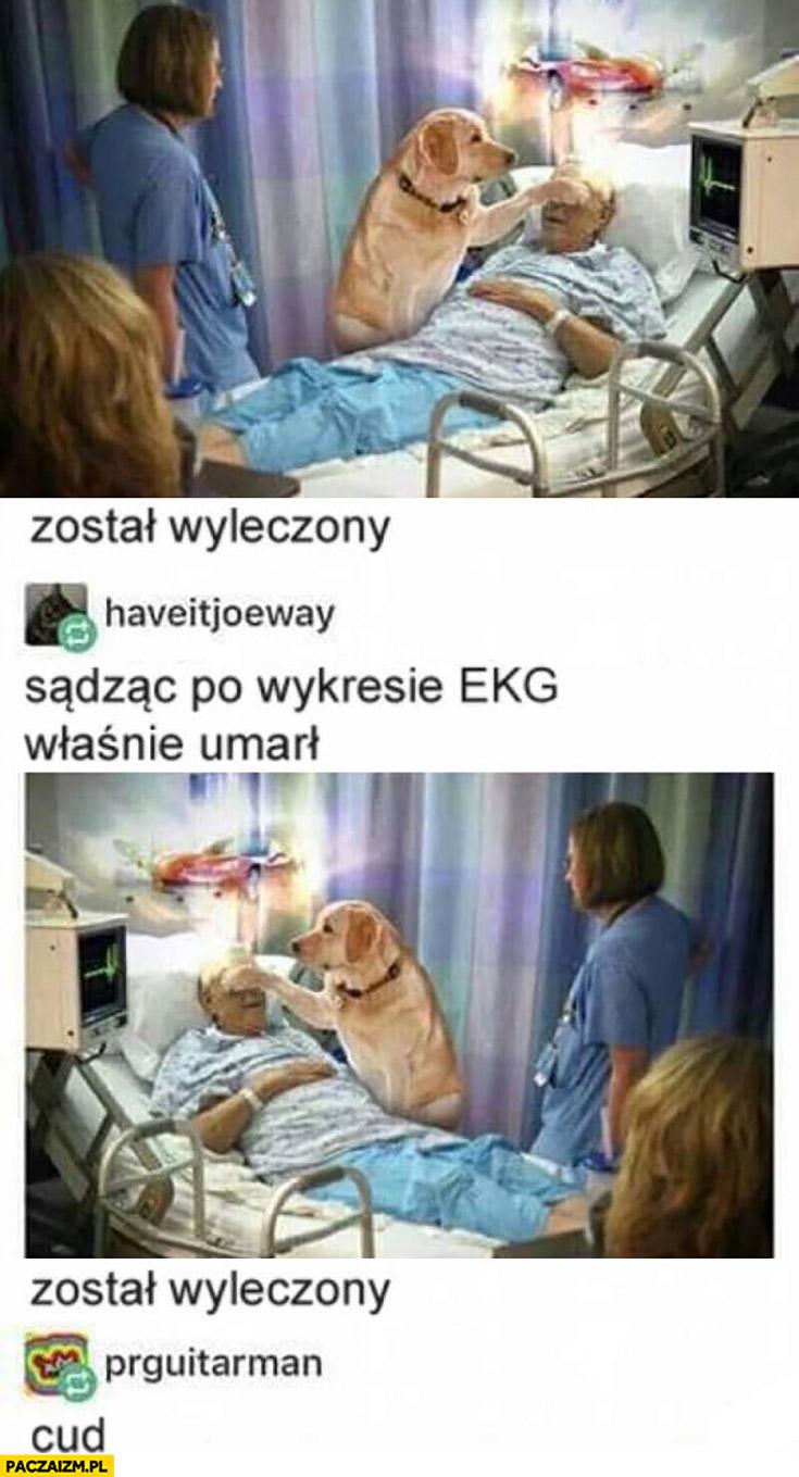 Pies pacjent został wyleczony, sądząc po EKG właśnie umarł lustrzane odbicie, został wyleczony cud