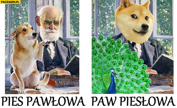 Pies Pawłowa, paw Piesłowa porównanie
