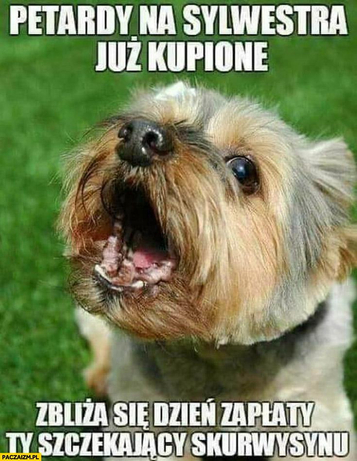 Pies petardy na sylwestra już kupione zbliża się dzień zapłaty Ty szczekający skurczybyku