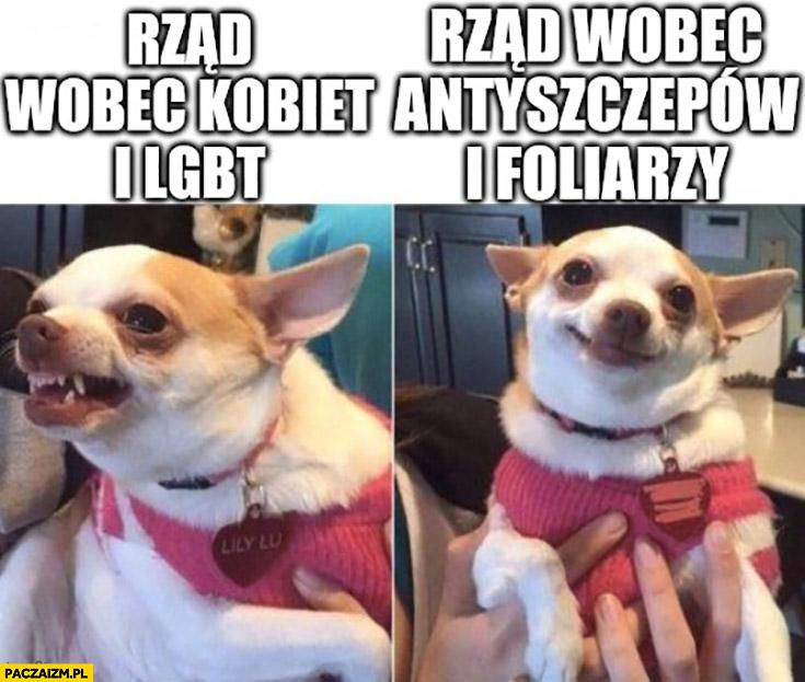 Pies piesek rząd wobec kobiet i LGBT zły vs rząd wobec antyszczepów i foliarzy grzeczny porównanie