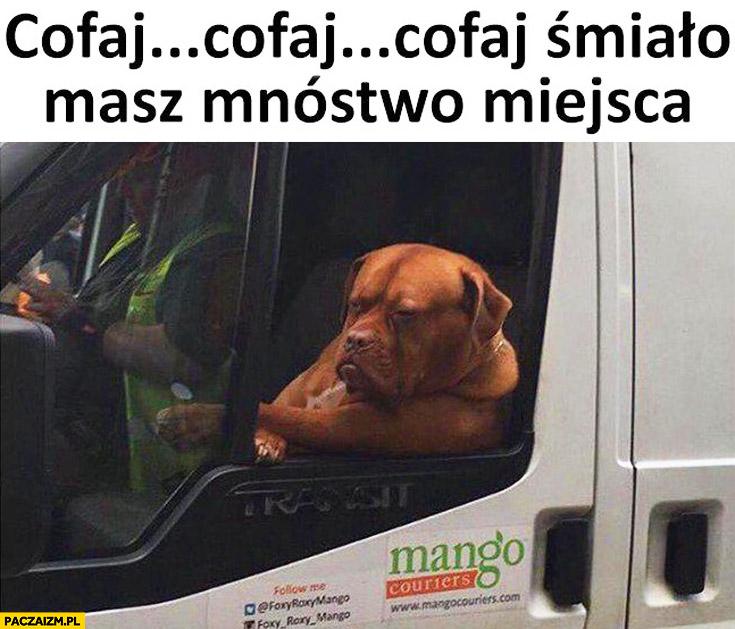 Pies pomaga parkować cofaj cofaj masz mnóstwo miejsca