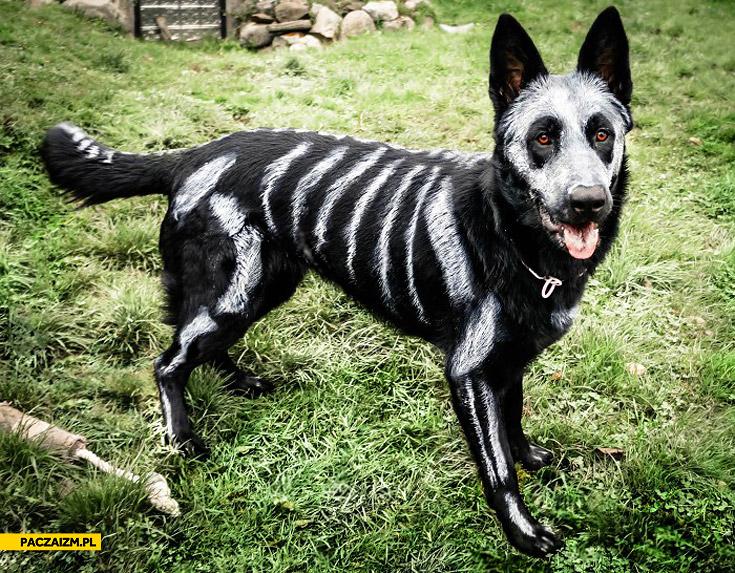 Pies pomalowany kościotrup