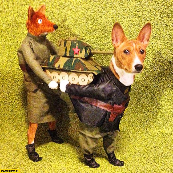 Pies przebranie niesie czołg z lisem