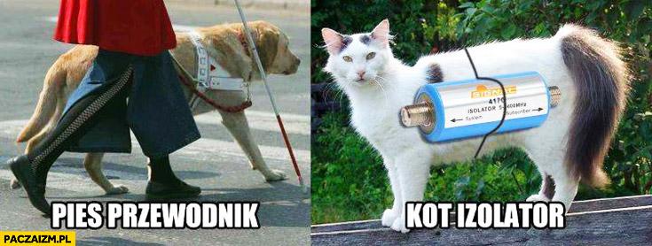 Pies przewodnik, kot izolator