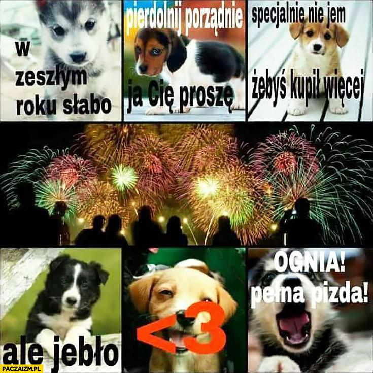 Pies psy petardy fajerwerki sylwester: w zeszłym roku słabo, pierdzielnij porządnie ja Cię proszę, specjalnie nie jem żebyś kupił więcej, ale jebło ognia pełna pisda