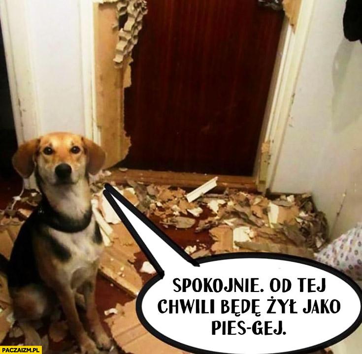 Pies rozwalił mieszkanie spokojnie od tej chwili będę żył jako pies gej Kevin Spacey