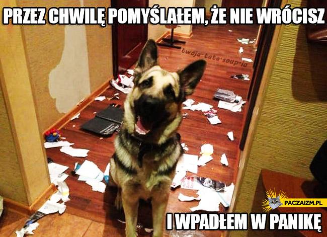 Pies spanikował