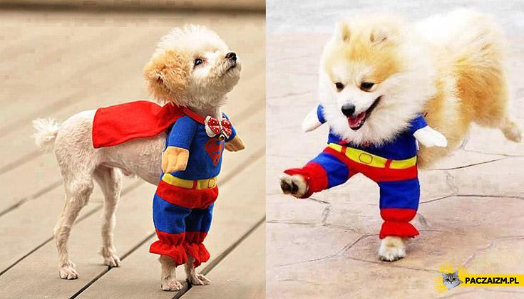 Pies superbohater, część 2