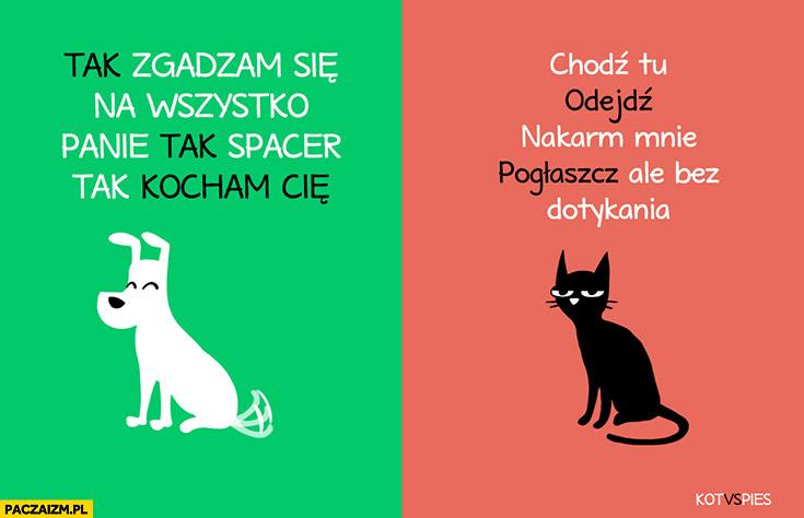 Pies: tak zgadzam się na wszystko panie, tak spacer tak kocham Cię. Kot: chodź tu, odejdź, nakarm, pogłaszcz, ale bez dotykania. Kot vs pies