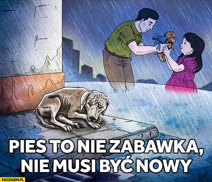 Pies to nie zabawka nie musi być nowy