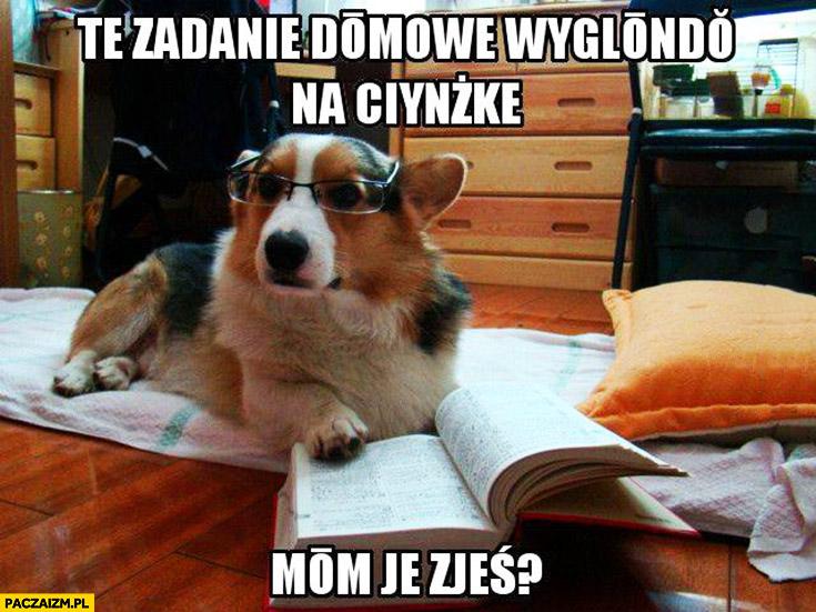Pies w okularach to zadanie domowe wygląda na ciężkie, mam je zjeść?
