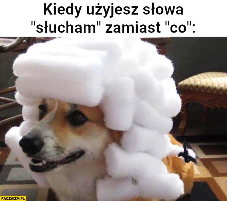 Pies w peruce kiedy użyjesz słowa słucham zamiast co