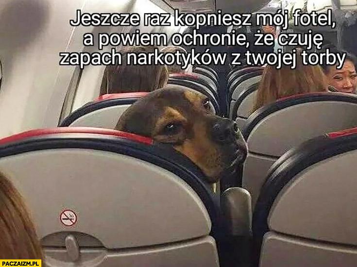 Pies w samolocie jeszcze raz kopniesz mój fotel a powiem ochronie, że czuję zapach narkotyków z Twojej torby