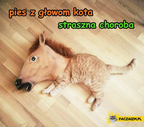 Pies z głowom kota straszna choroba