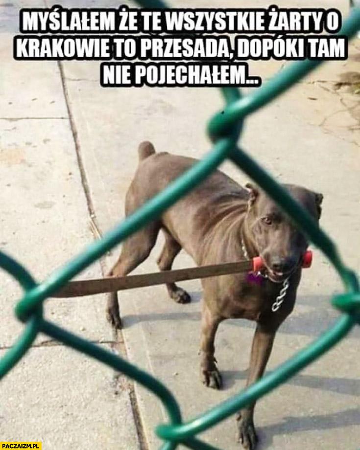 Pies z nożem maczetą myślałem, że te wszystkie żarty o Krakowie to przesada dopóki tam nie pojechałem