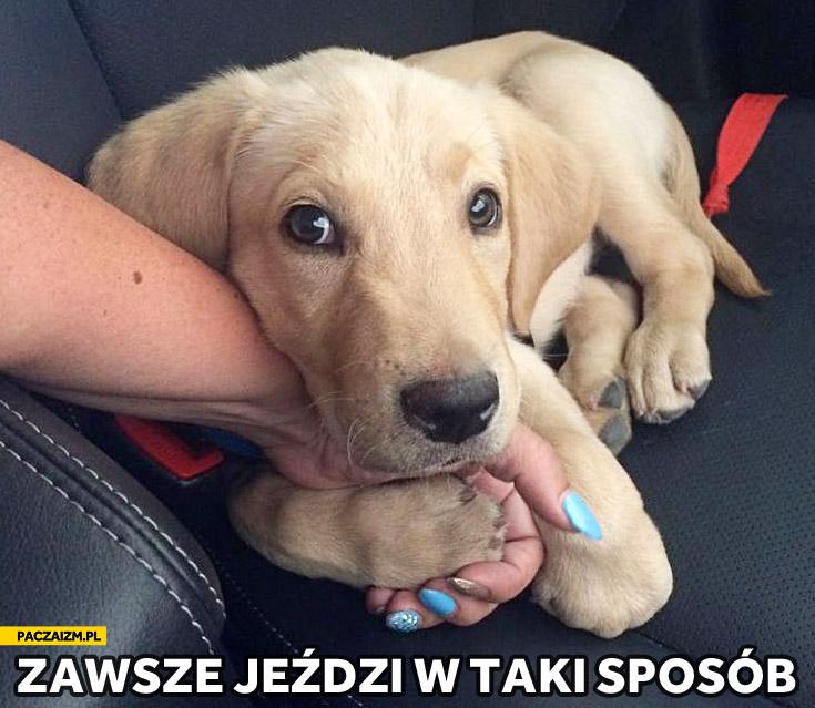 Pies za rękę w samochodzie