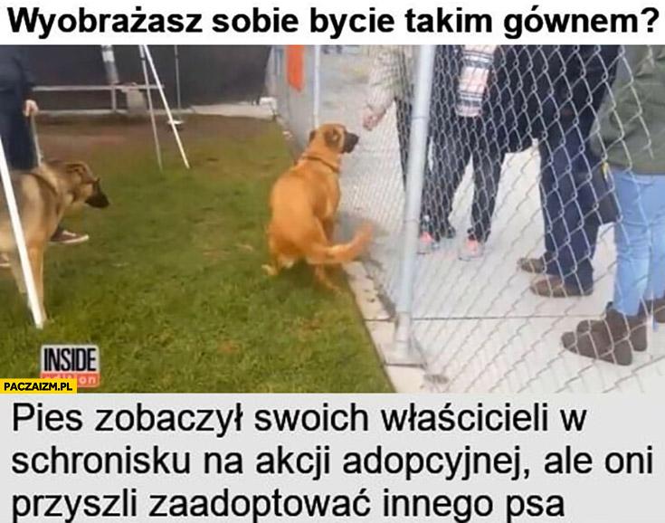 Pies zobaczył swoich właścicieli w schronisku na akcji adopcyjnej ale oni przyszli zaadoptować innego psa