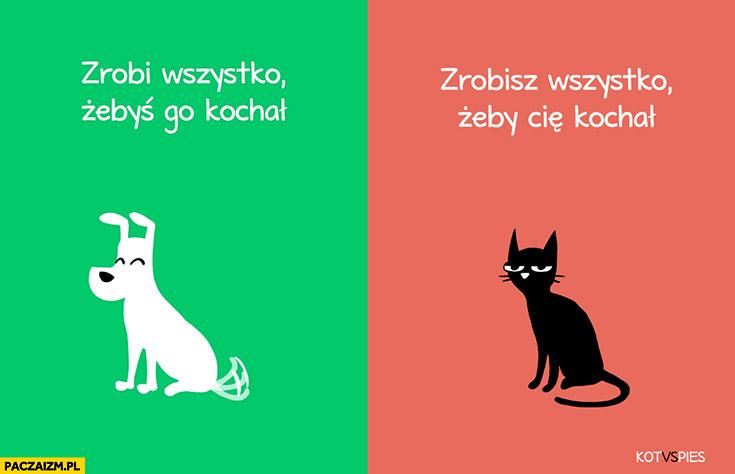 Pies zrobi wszystko żebyś go kochał, kot zrobisz wszystko żeby Cię kochał kot vs pies