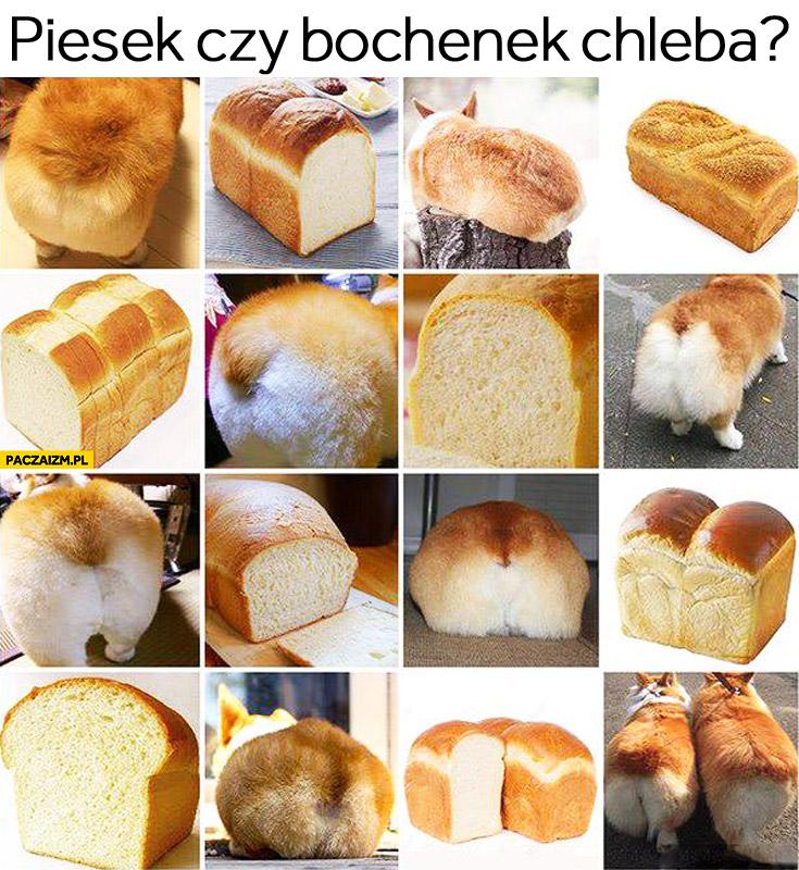 Piesek czy bochenek chleba? zagadka