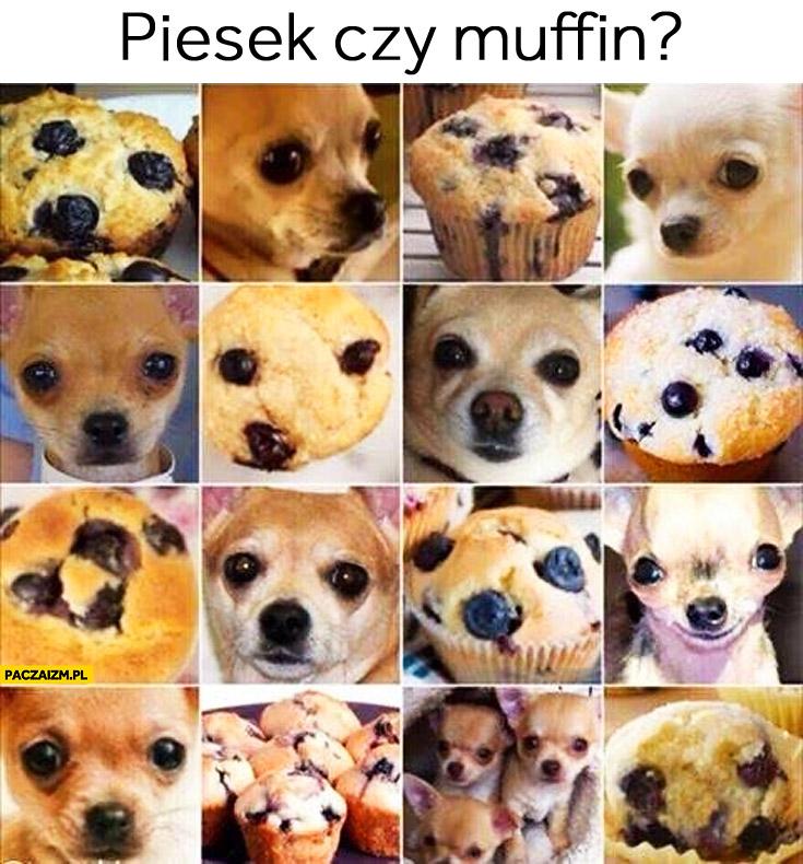 Piesek czy muffin? zagadka