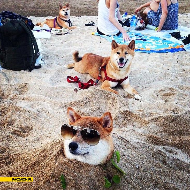 Pieseły na plaży