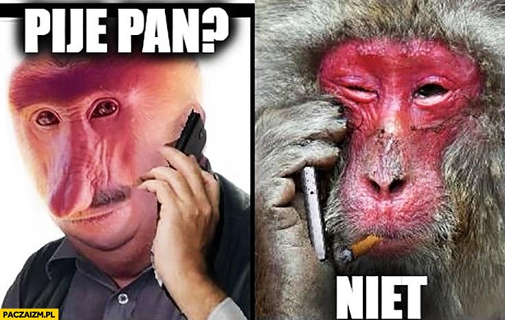 Pije pan? Niet typowy Polak nosacz małpa rozmawia z Rosjaninem Ukraińcem