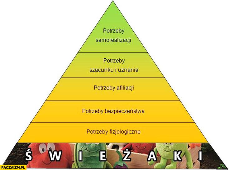 Piramida potrzeb na samym dole świeżaki z Biedronki