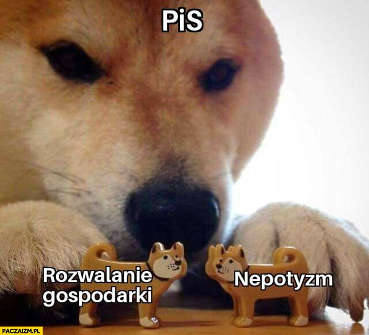 PiS rozwalanie gospodarki nepotyzm pies pieseł doge
