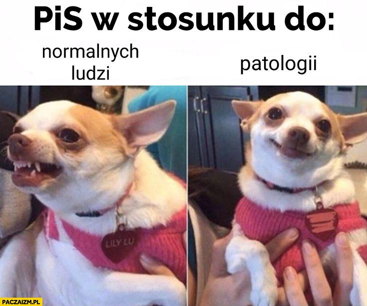 PiS w stosunku do normalnych ludzi vs patologii pies piesek