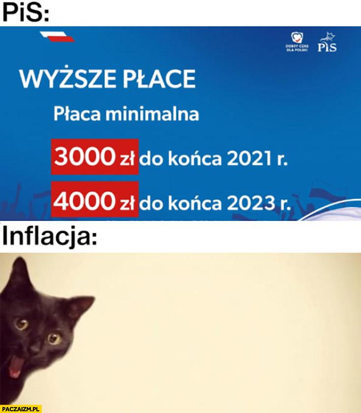 PiS wyższe płace inflacja zdziwiony przerażony kot