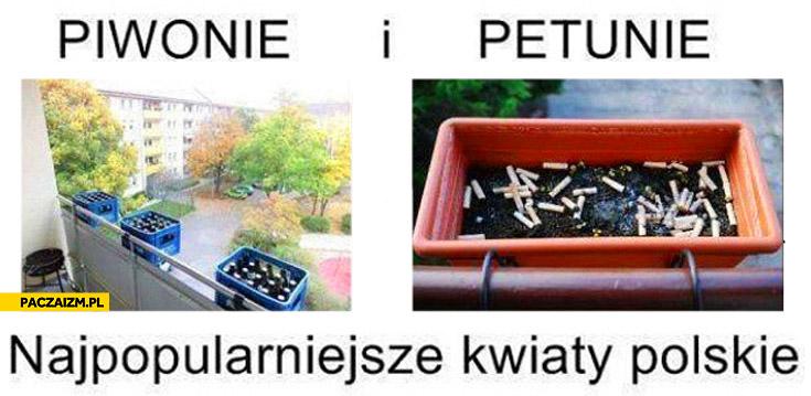 Piwonie petunie najpopularniejsze polskie kwiaty