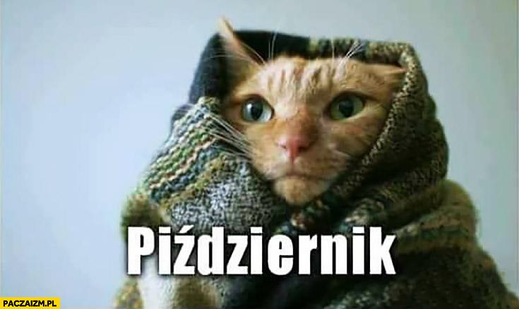 Piździernik październik kot owinięty kocem