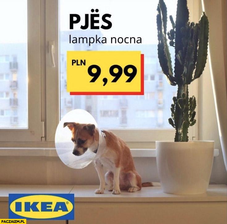 Pjes lampka nocna Ikea pies z kloszem na głowie