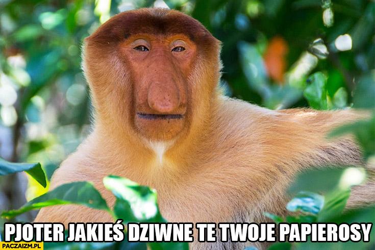 Pjoter jakieś dziwne te Twoje papierosy typowy Polak nosacz małpa