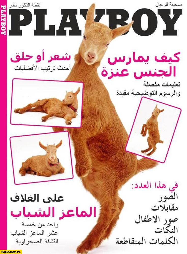Playboy dla ciapatych muzułmanów kozy