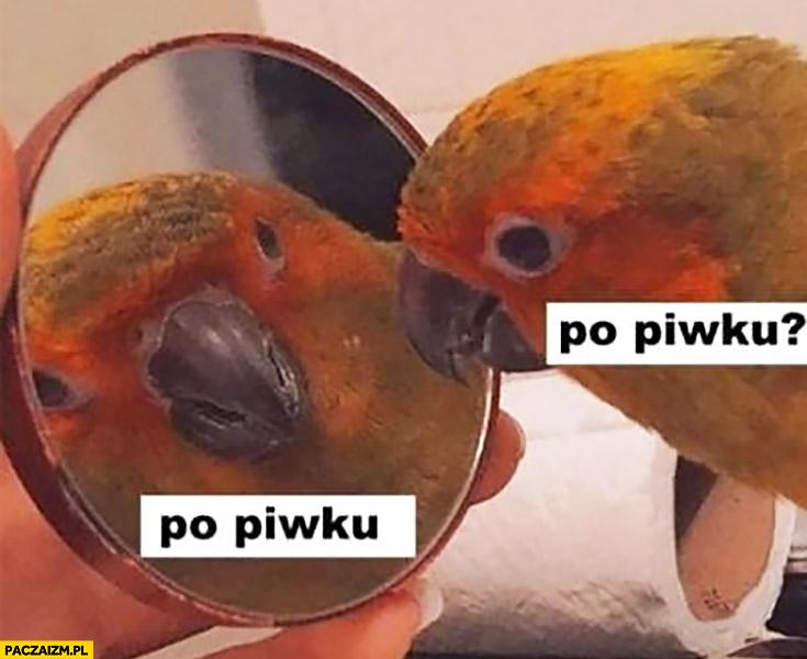 Po piwku papuga pyta sama siebie w lusterku lustrze
