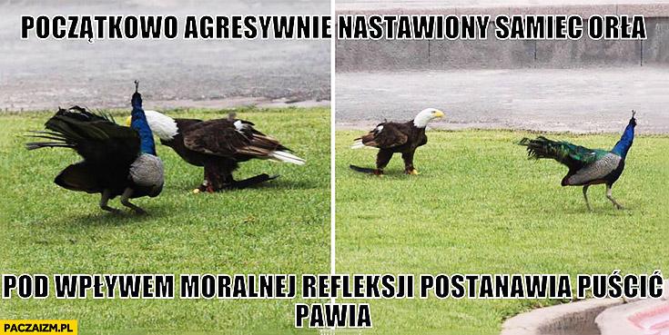 Początkowo agresywnie nastawiony samiec orła pod wpływem moralnej refleksji postanawia puścić pawia