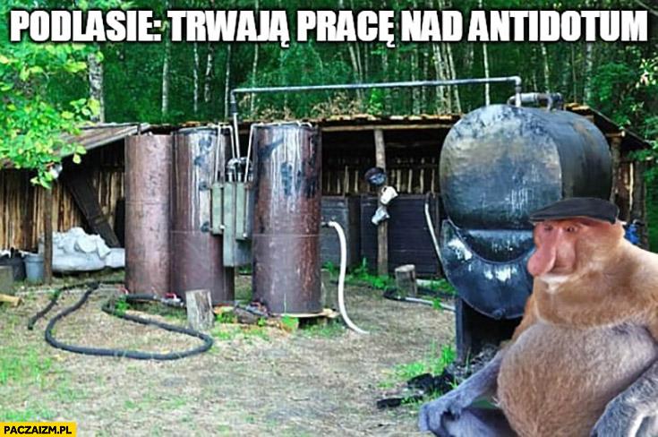 Podlasie trwają prace nad antidotum typowy Polak nosacz małpa