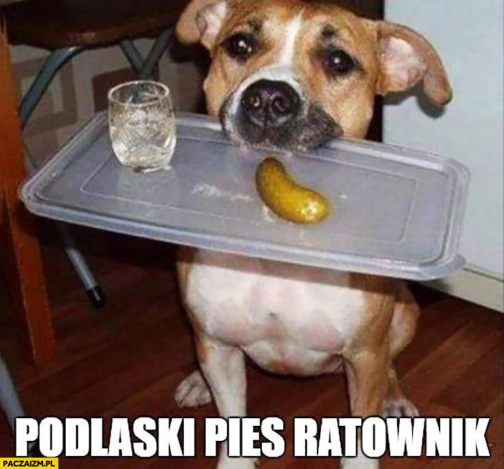 Podlaski pies ratownik wódka zagrycha podaje kieliszek z klinem