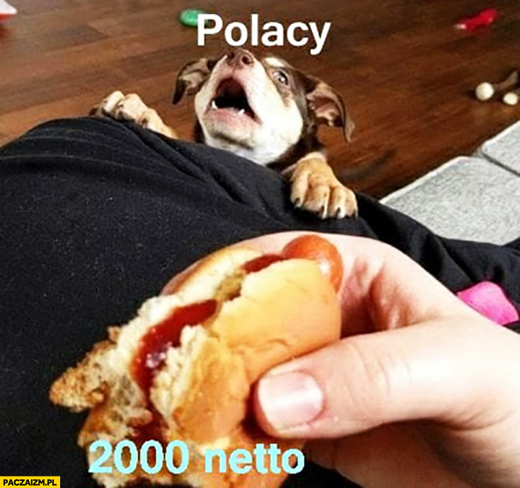 Polacy 2000 zł netto pies chce hamburgera nie może sięgnąć