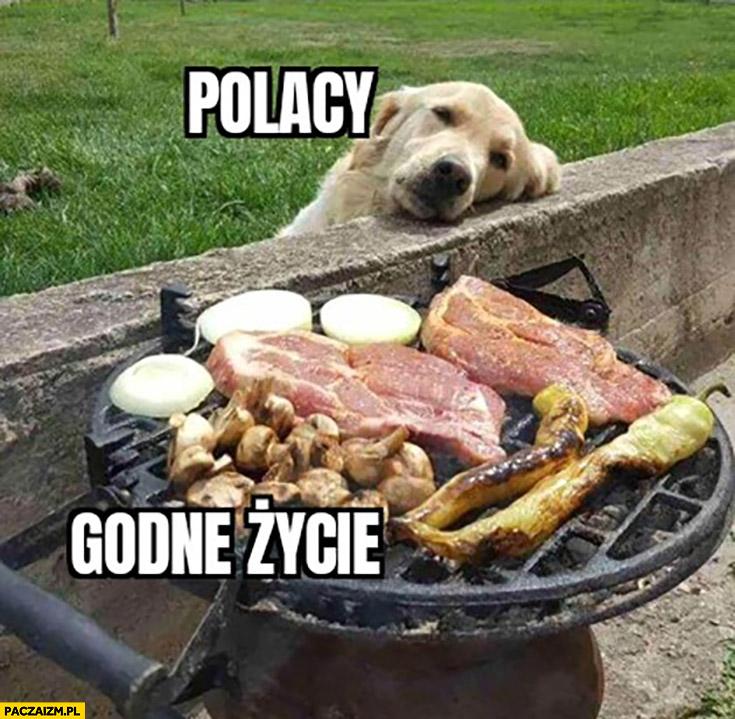 Polacy godne życie pies patrzący na mięso na grillu