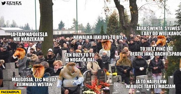 Polacy na cmentarzu typowy Polak nosacz małpa