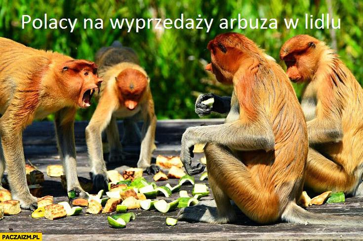 Polacy na wyprzedaży Arbuza w Lidlu typowy Polak nosacz