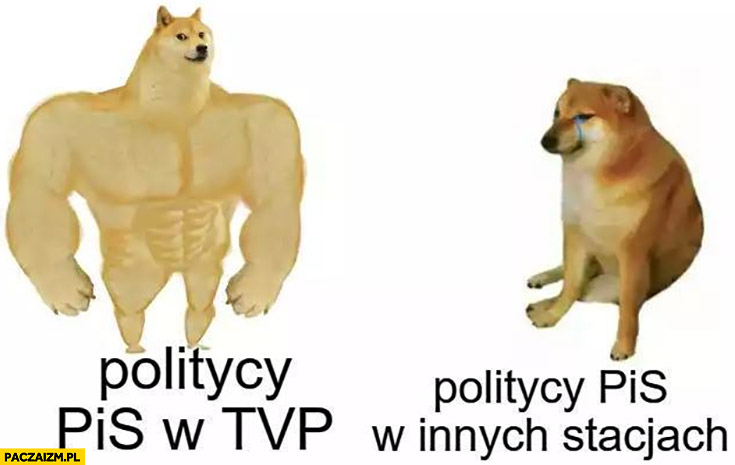 Politycy PiS w TVP vs politycy PiS w innych stacjach pies pieseł doge