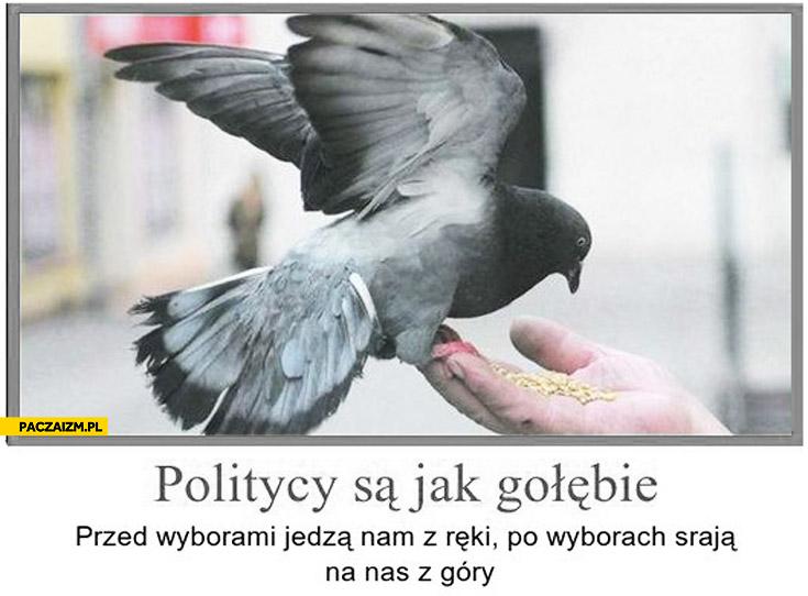 Politycy są jak gołębie przed wyborami jedzą nam z ręki po wyborach srają na nas z góry