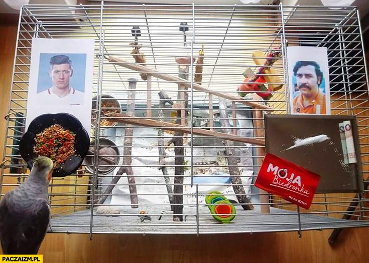 Mecz Polska Kolumbia Pablo Escobar ptak wybiera kto wygra