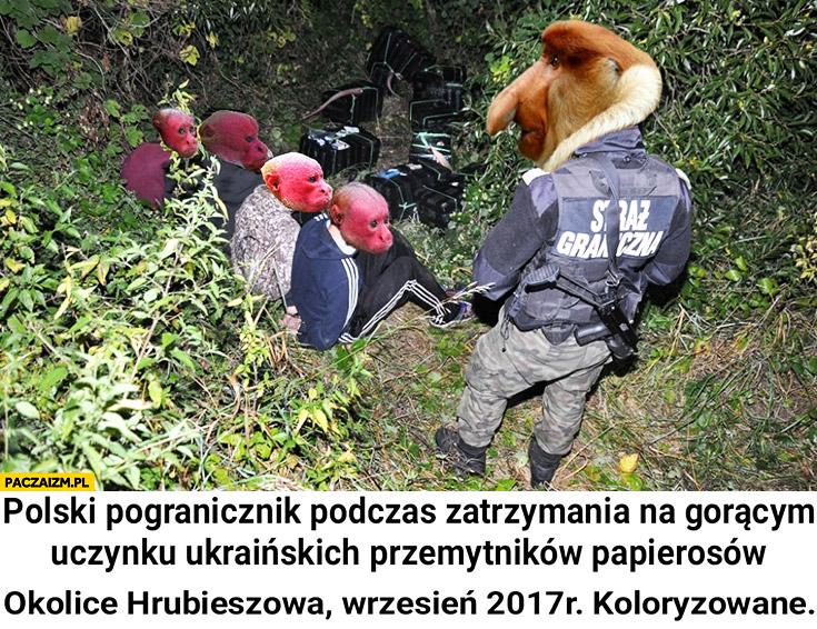 Polski porucznik podczas zatrzymania na gorącym uczynku Ukraińskich przemytników papierosów okolice Hrubieszowa wrzesień 2017, koloryzowane. Typowy Polak nosacz małpa