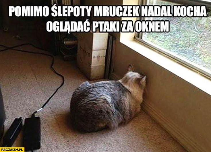 Pomimo ślepoty mruczek nadal kocha oglądać ptaki za oknem kot patrzy się w ścianę